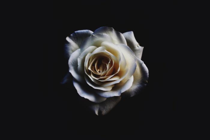 RoseWhite:sebastian-molina-fotografia-101308